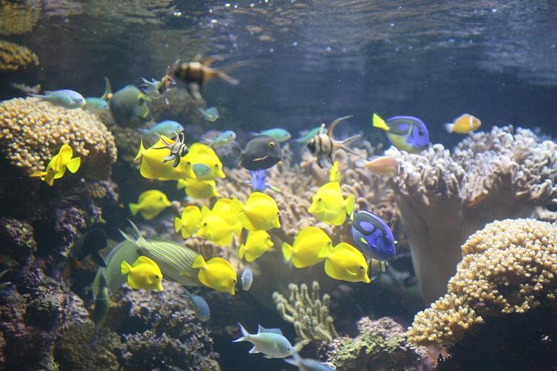 korallzatony-halakkal