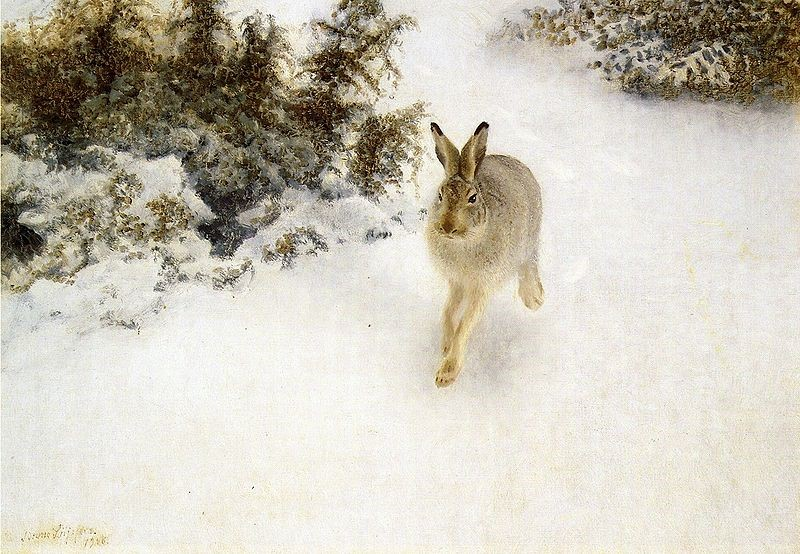winter-hare